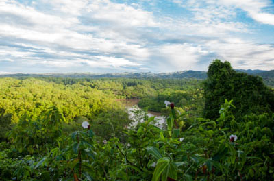 Rainforest Overview