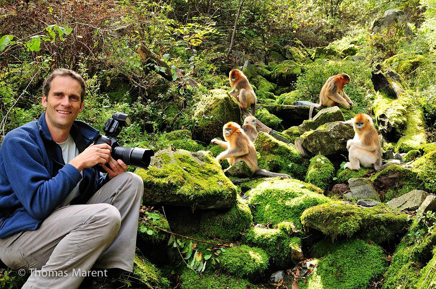 Wildlife and Rainforest Photographer Thomas Marent Golden Snub-Nosed Monkeys