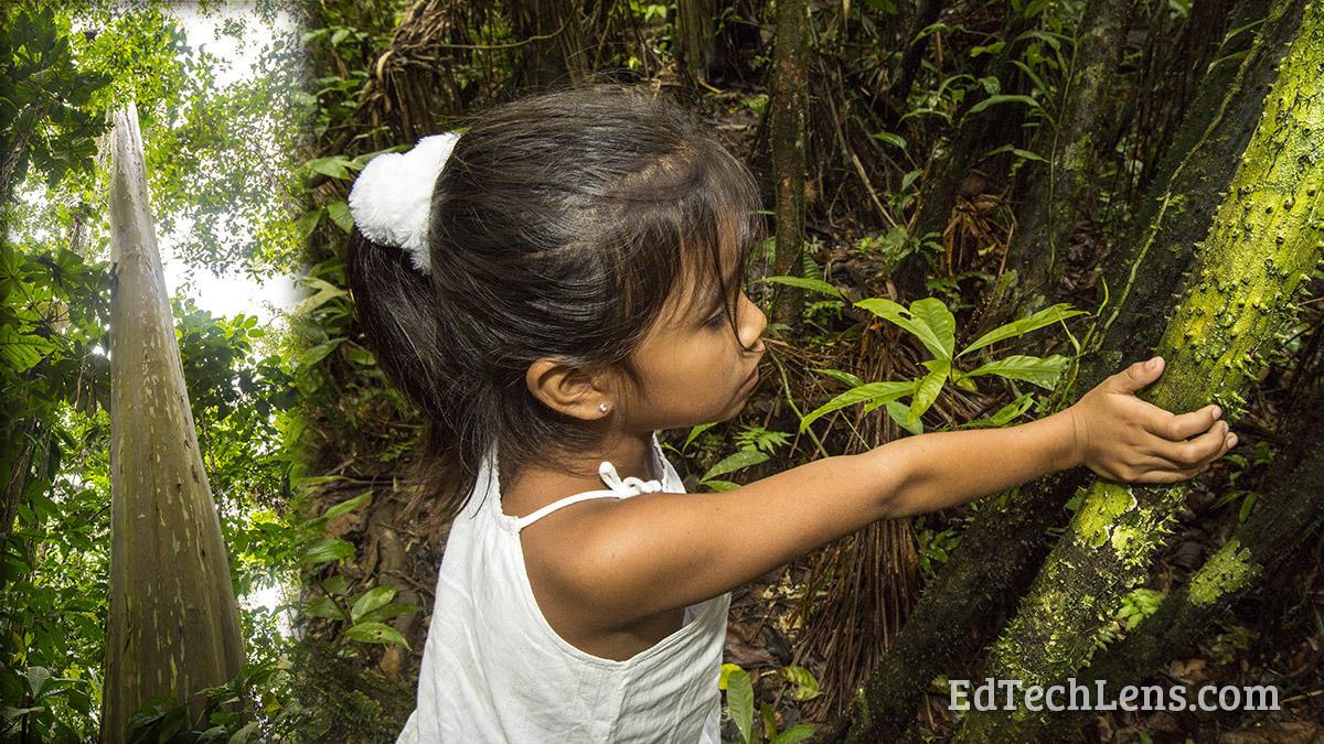 Rainforest Plants Protection Methods