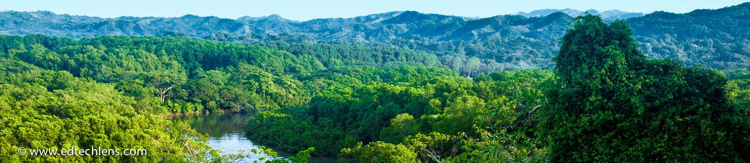Age Rainforest Trees Costa Rican Rainforest