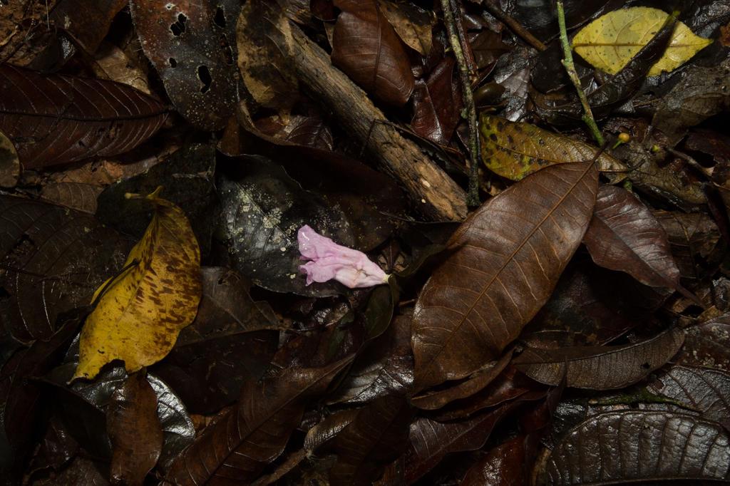 Decomposition Nature Recycles Image EdTech Lens Ellen Senisi