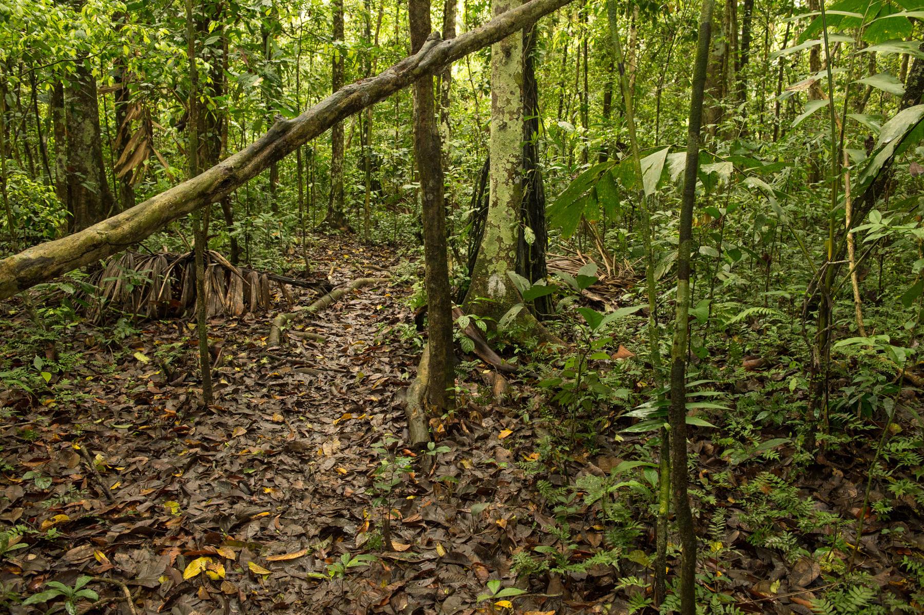plants, trees, forest floor, rainforest