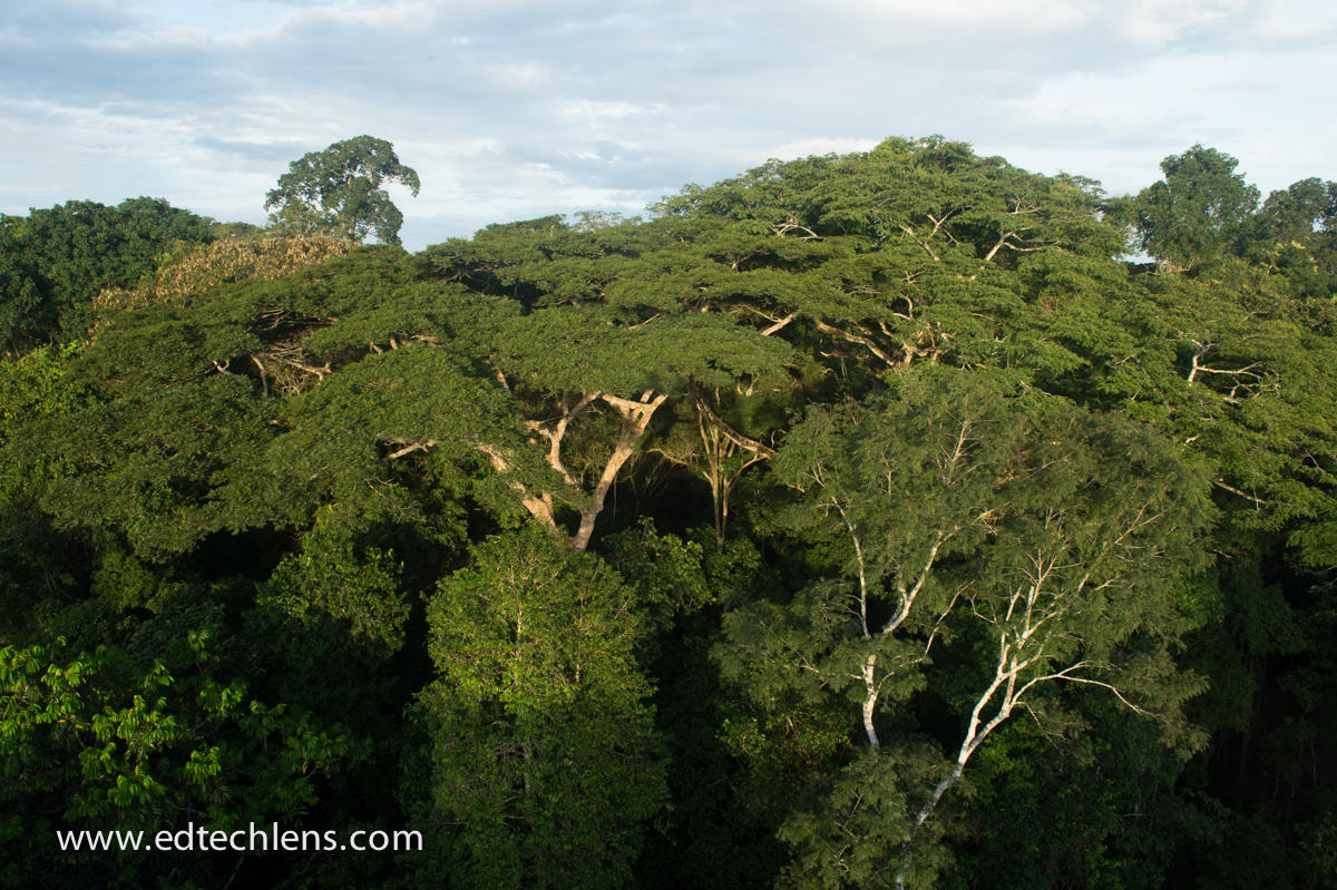 View of emergent layer from Canopy Tower (related to acacia trees)