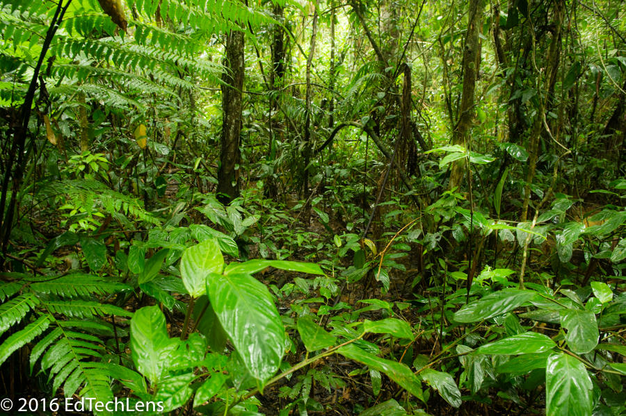 Rainforest Science Blog for Kids: A Perfect Fit: Leaf Adaptations ...