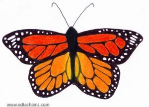 Monarch Butterfly illustration Rainforest