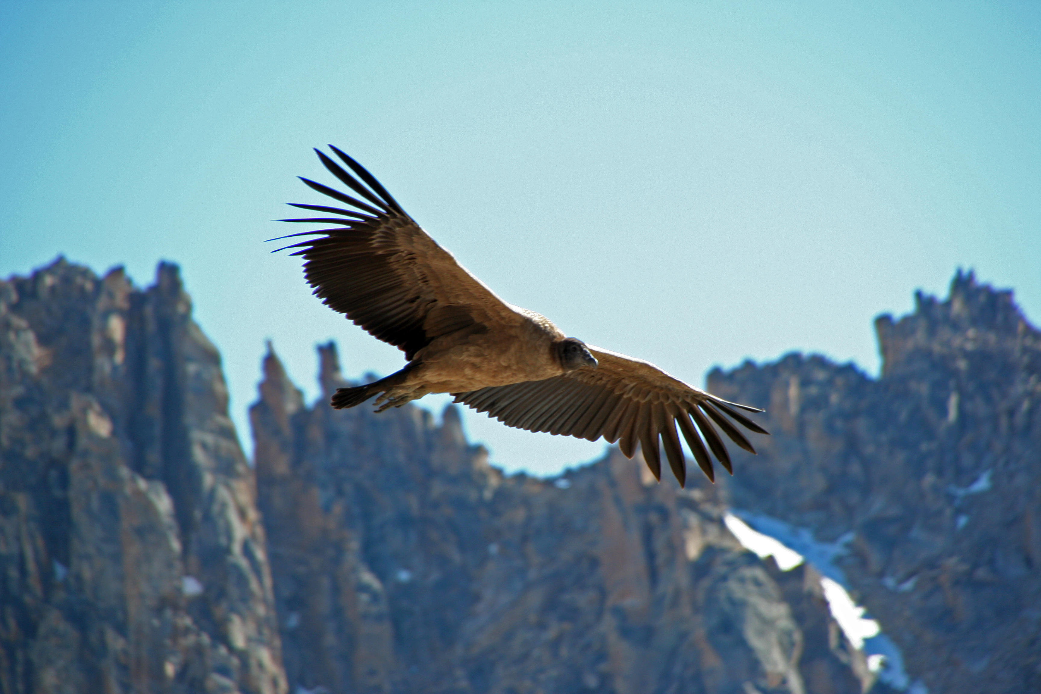 Andean Condors EdTechLens Science Blog