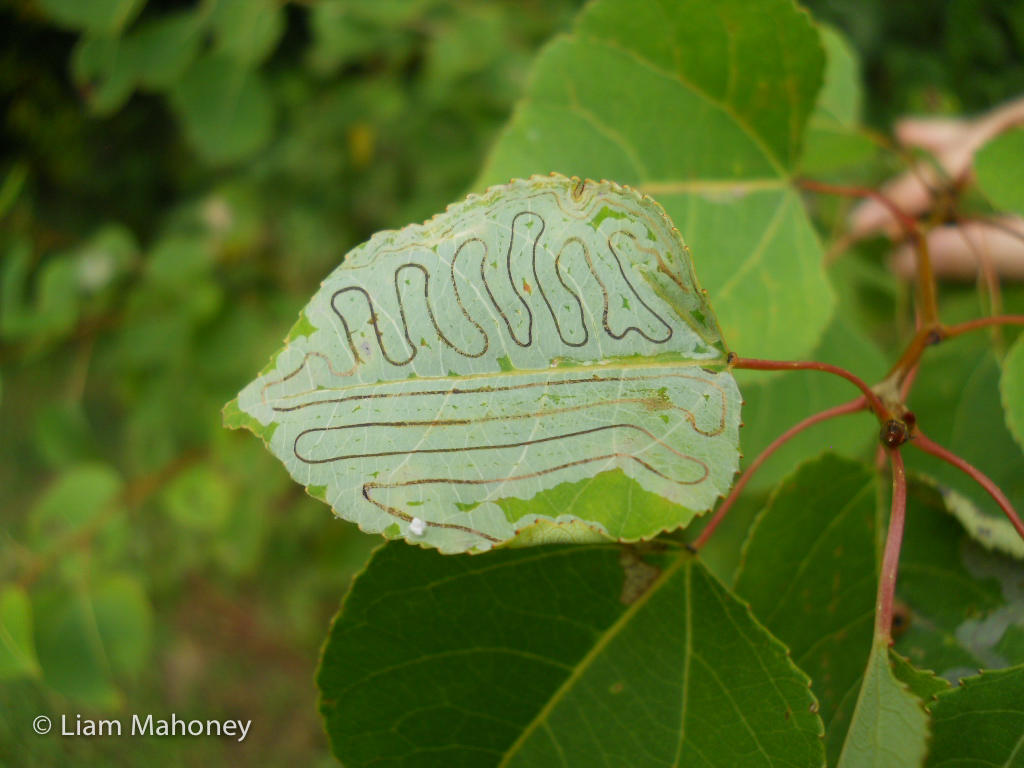 Leafminer Patterns in Nature Rainforest Science Blog Kids