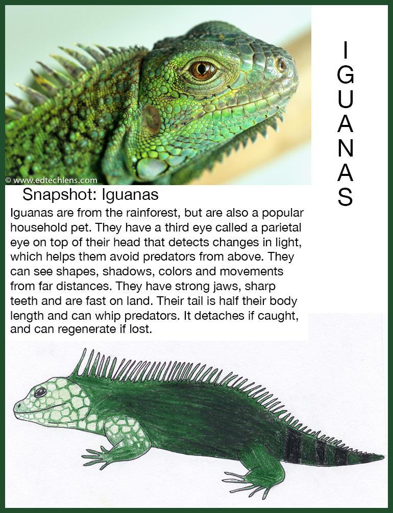 Iguanas Rainforest Science Blog for Kids Snapshot