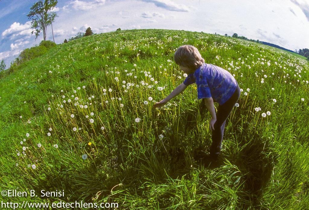 Boy picking dandelion puffs in big field