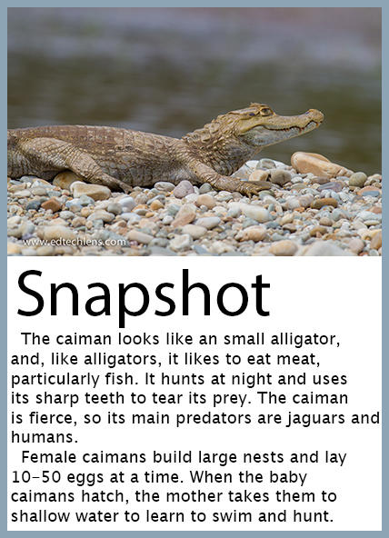 Snapshot Caiman with Information