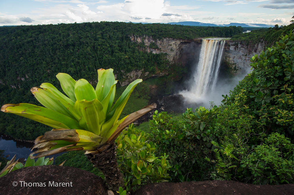 Bromeliad Guyana Kaieteur Falls Rainforest Ecosystems K-5 Students